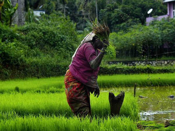 Rural Management: जानिए रुरल मैनेजमेंट में करियर, कोर्स, सैलरी और जॉब की संभावनाएं